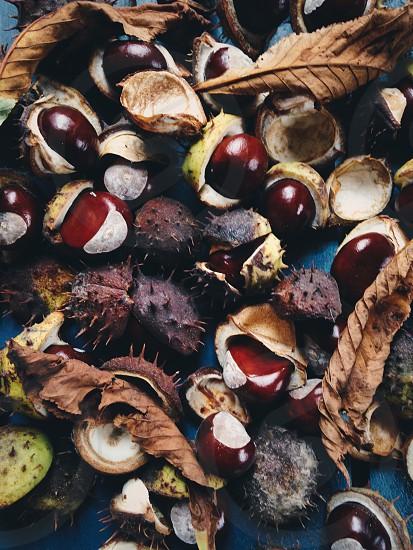 Chestnuts texture photo