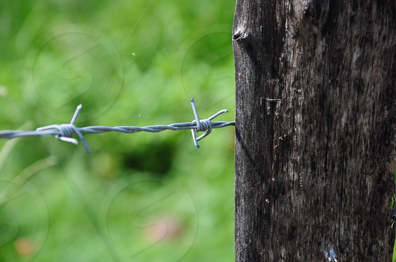 barb wire on wood log photo