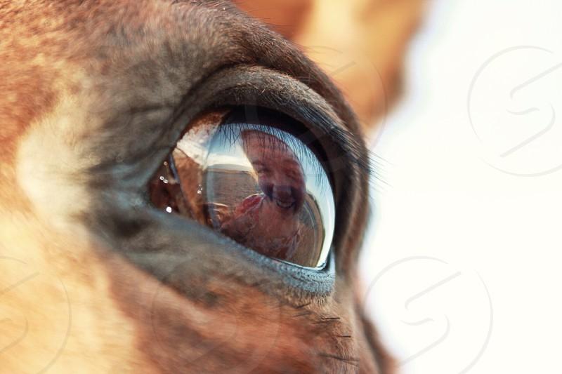 brown horse looking at man  photo