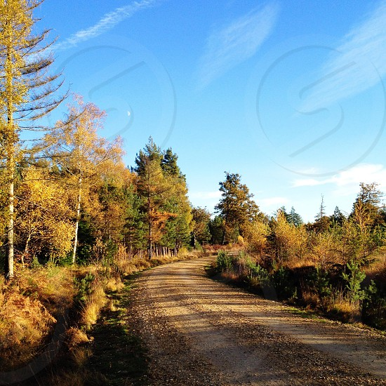 road near the woods photo