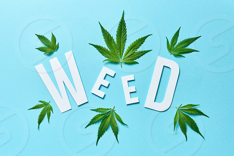 Creative pattern with green cannabis leaves and white paper word Weed on a light blue background. photo