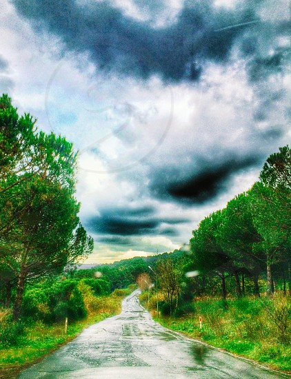 landscape photo of narrow road between grass fields with trees under white clouds photo