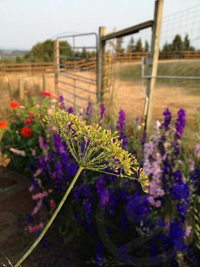Garden Weeds Flowers Sunset Nature Outdoors Grass Fence Gate  photo