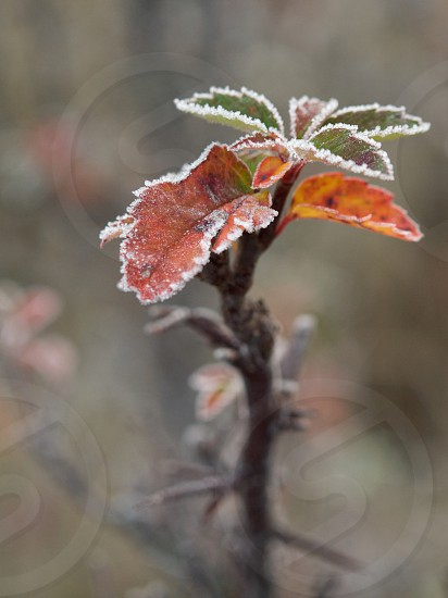 Frost. photo