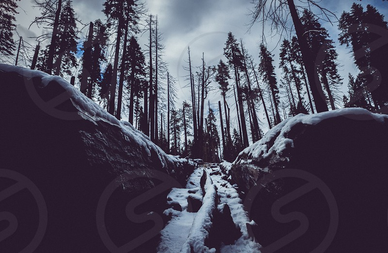 Wintery forest  photo