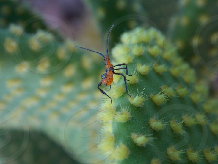 Insects on plant photo