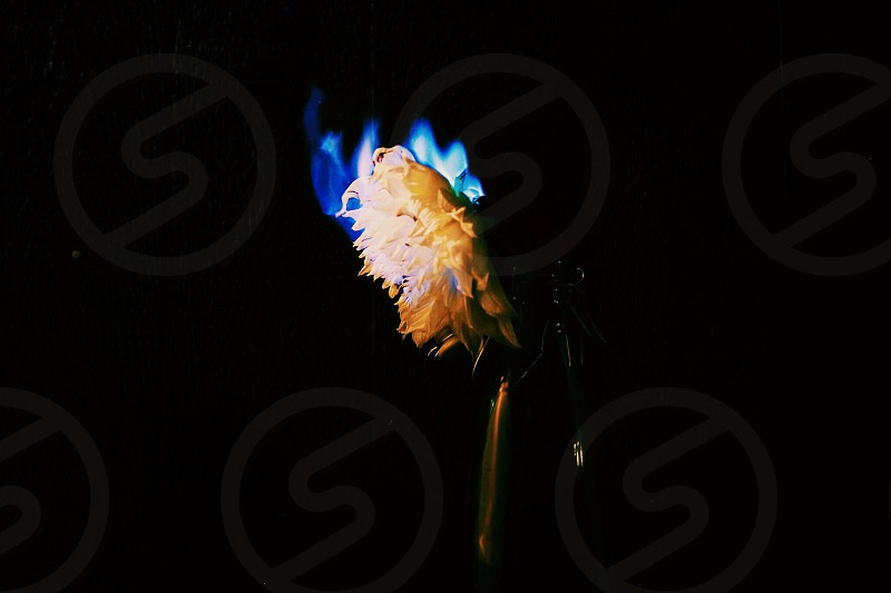 The burning flower transparency fire blue flames glass vase low light photo