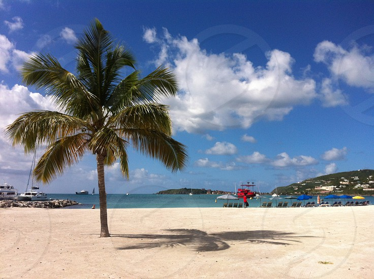 Saint Maartencaribbepalmtreetreebeachsummer photo