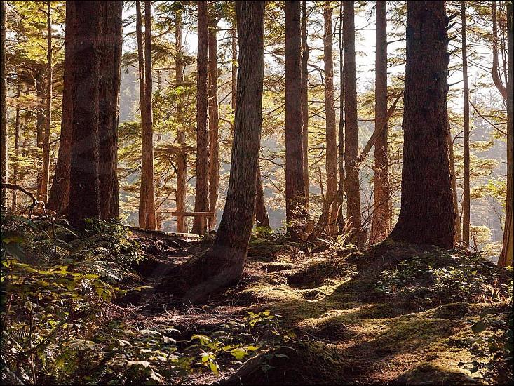 brown tree trrunks over sunrise photo