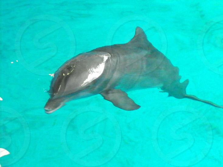 Clearwater Aquarium Clearwater Florida- Everyone goes to visit stars of Dolphin Tale 2 Hope & Winter photo