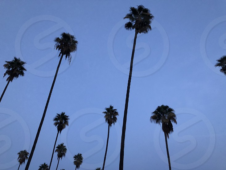 Palm tree Los Angeles nature abstract travel wanderlust photo
