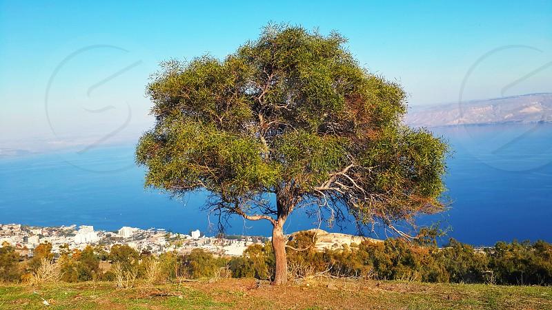 Tree with view to Sea of Galilee lake - Tiberias Israel photo