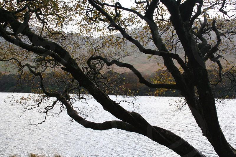 Tree at the Abbey photo