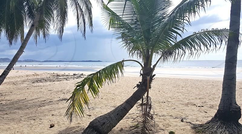 las baulas national marine park leather back turtle costa rica palms beach photo