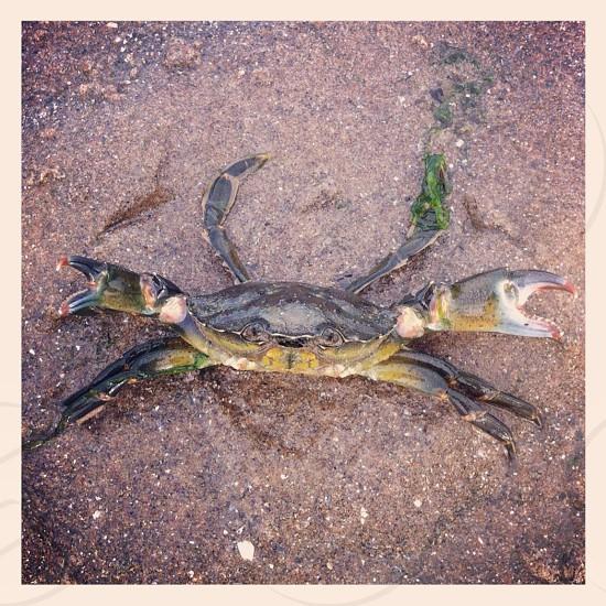 Crab attack photo
