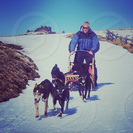 DogSledding at SnowFarm (Cardrona New Zealand) photo