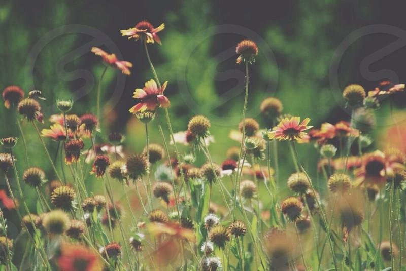 brown round flower photo