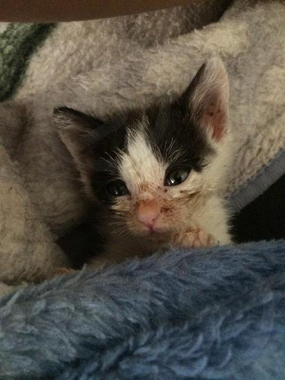 Cozy Kitten photo