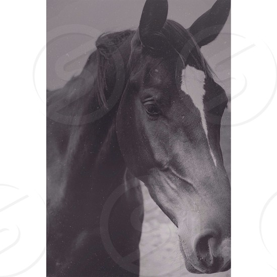 photo of horse photo