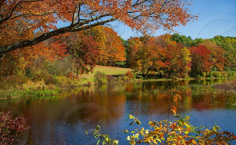Connecticut fall time foliage  photo