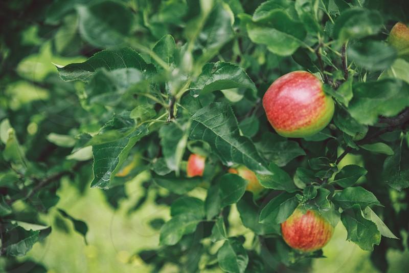 Healthy fruits photo