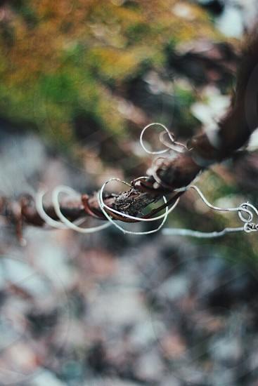 Macro Plant Green Spring Nature Vine Snapchat OhSees Instagram Mini_Tent MaxwellMJames Midvvest  photo