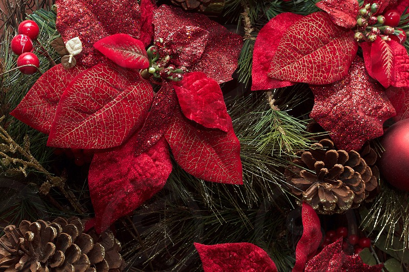 red poinsettias and brown pine cones photo