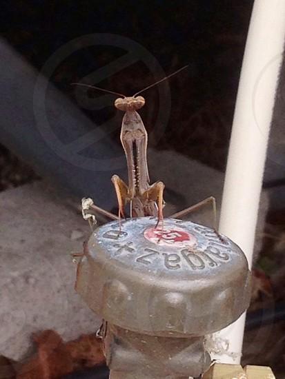 Praying mantis on gas bottle photo