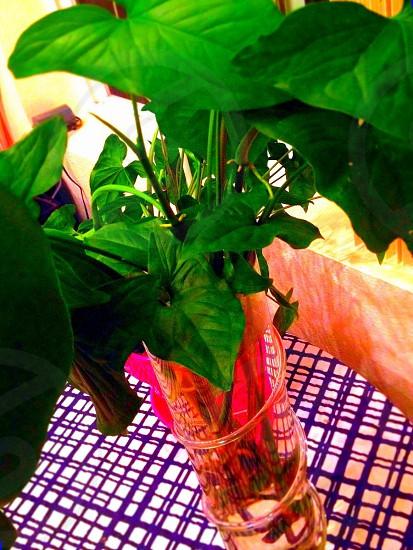 Plant green photo
