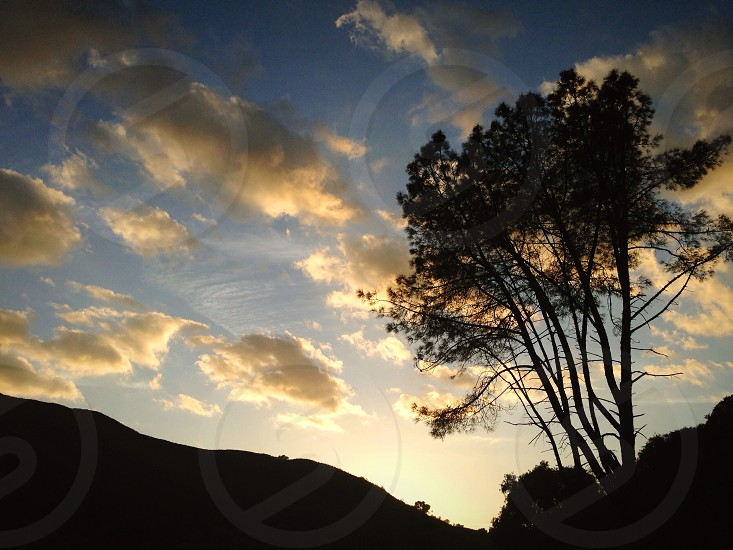 sky with clouds and tree photo