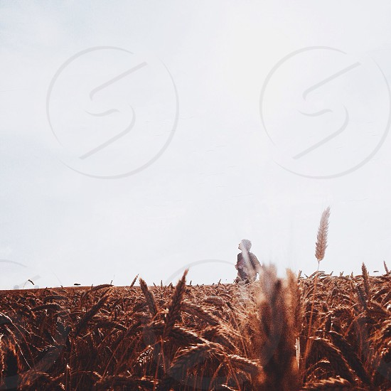 person standing in middle of brown wheat field photo
