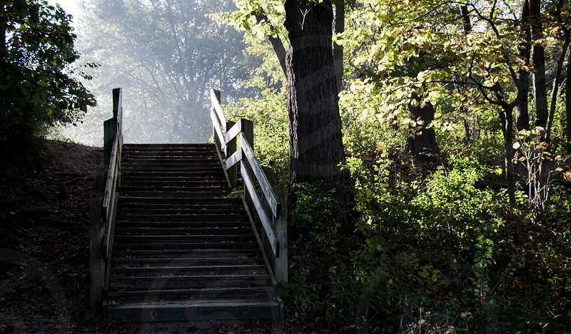 nature forest forests tree trees path stairs sunlight sunrise sun natural light light natural leaves eerie sunshine sun rays  photo