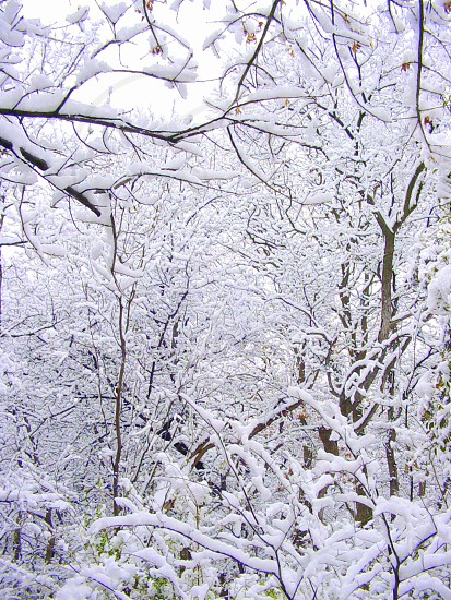 photo of withered trees covered with snow photo