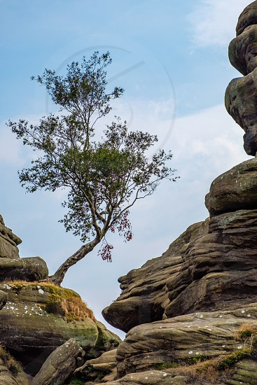 Scenic view of a tree growing on Brimham Rocks in Yorkshire Dales National Park photo