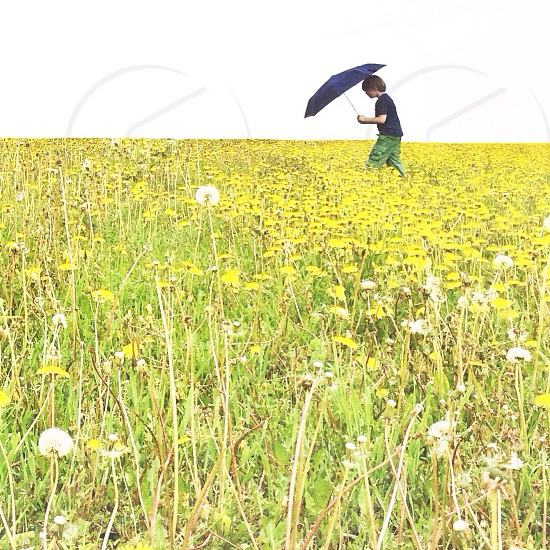 toddler in blue shirt on yellow flower field photo