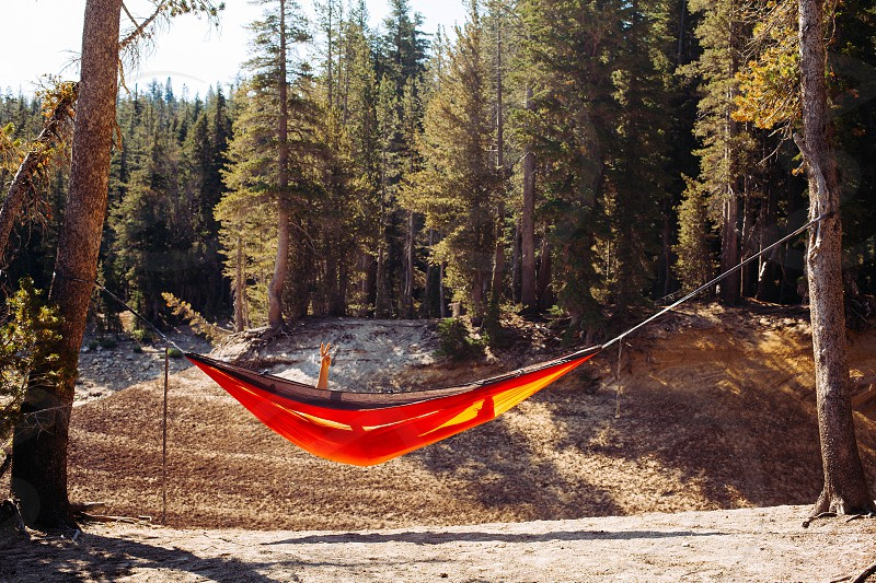person lying on orange and black hammock tied between two brown trees photo