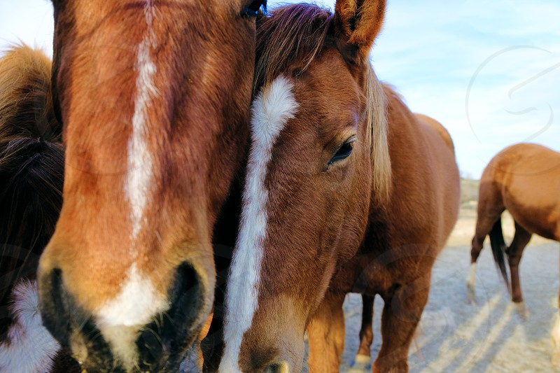 Horse friendship closeup in farm field. photo