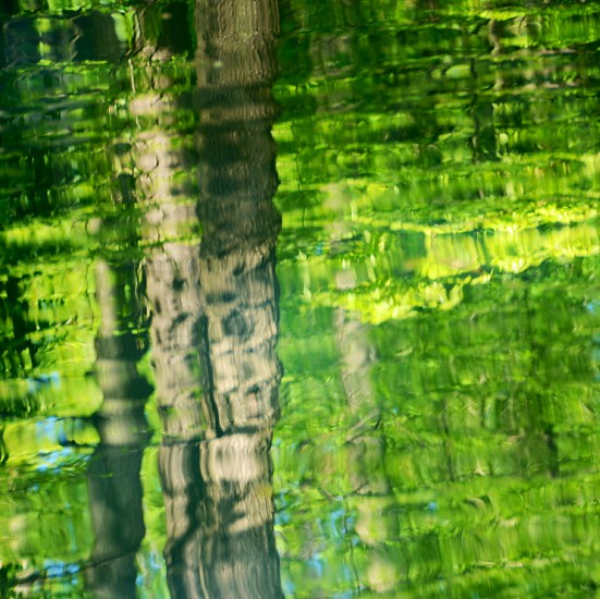 view of trees reflected on water photo