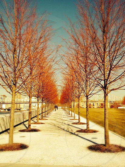 Four Freedoms Park. Roosevelt Island. NYC. photo