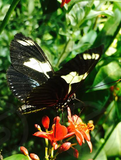 Butterfly nature garden photo