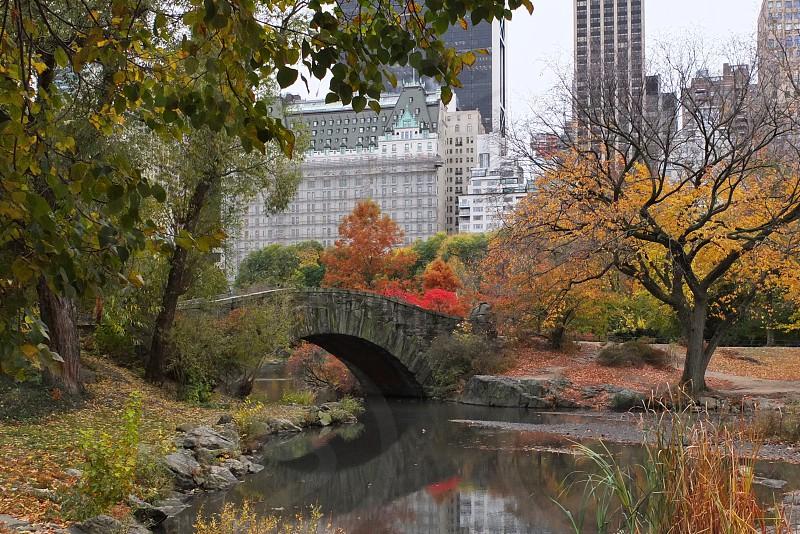 bridge near tree photo