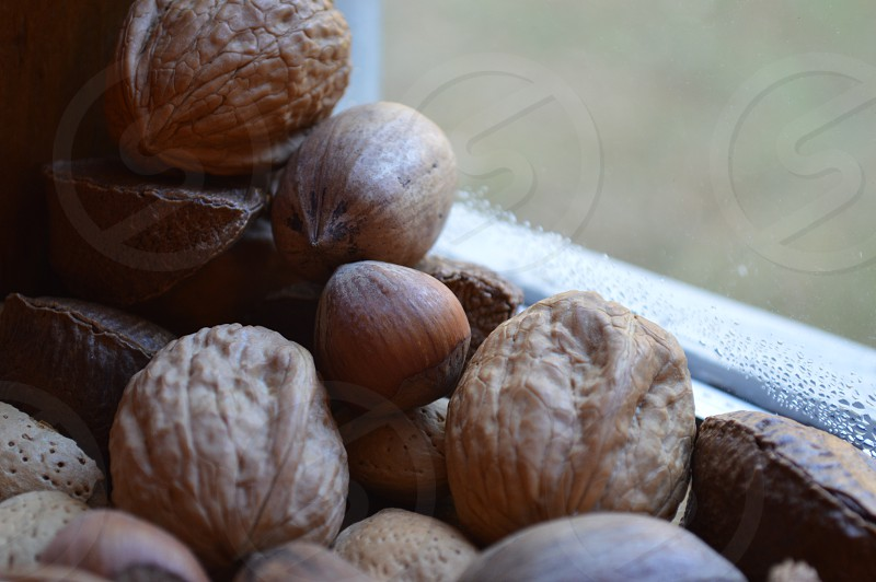 brown nuts photo