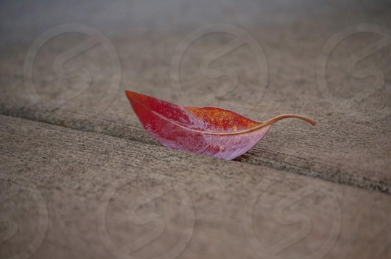 red leaf on ground photo