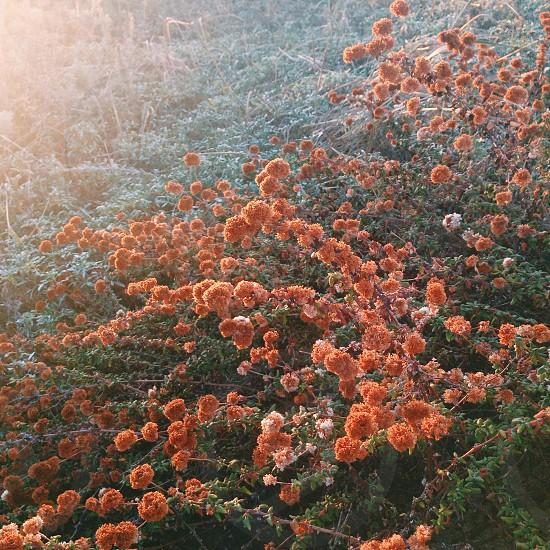 Plants on the California coastline photo