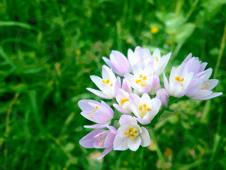 Field flowers photo