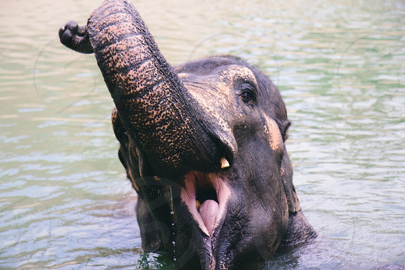 black elephant taking a bath photo