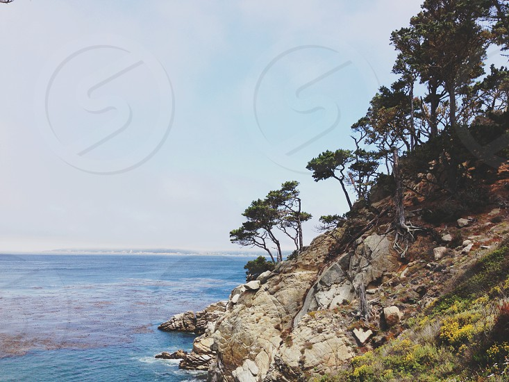hills with tree and beach photography photo