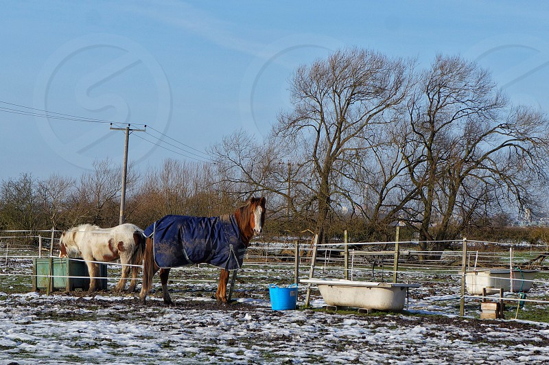 brown horse with blue cloth near other white and brown horse and fence with white bathtub and blue bucket in distant of grey electric post near leafless trees under blue sky during daytime photo