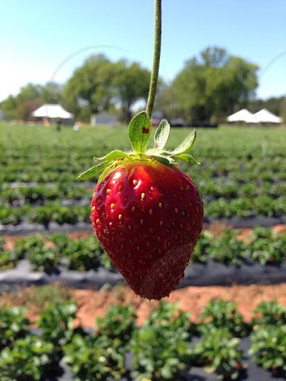 Beautiful Berry photo