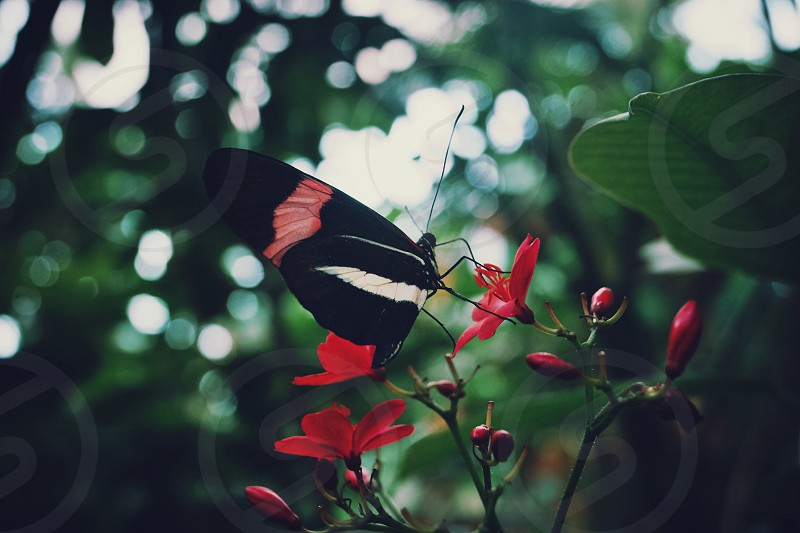 Butterfly spring blooms red photo